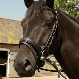 Heritage English Leather Comfort Bridle-With Flash Noseband