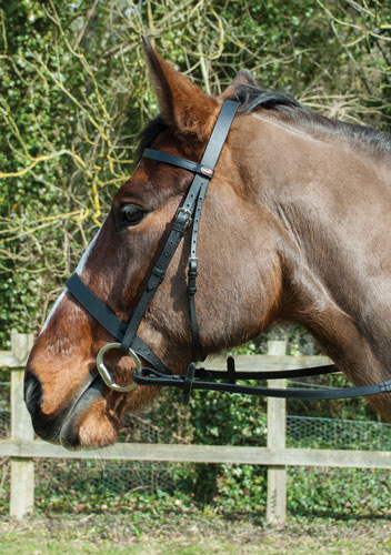 Windsor Equestrian Leather Bridle With Flash Noseband