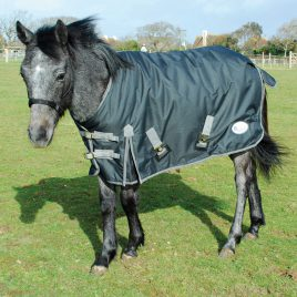 Rhinegold Konig Mid Weight Small Pony/Foal Outdoor Rug