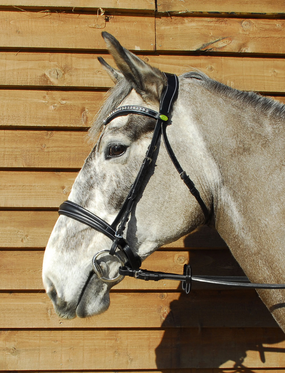 Rhinegold Anatomical Cavesson Bridle Elite Equestrian