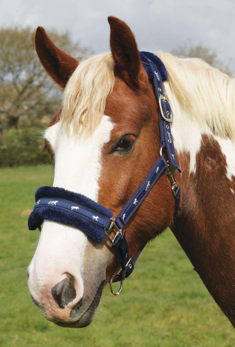 Rhinegold Padded Head Collar Elite Equestrian
