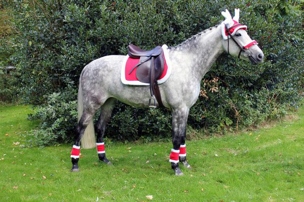 Elite Equestrian Elite Equestrian Are Proud To Offer