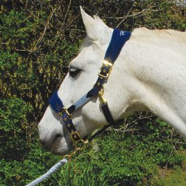 Rhinegold Anatomical Head collar And Lead rope Set