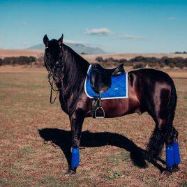 Equestrian Stockholm Sapphire Dressage Saddle Pad