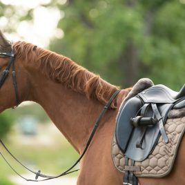 Mattes Autumn/Winter Saddle Pad