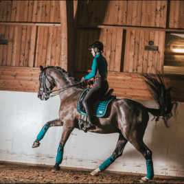 Equito Teal Fleece Bandages