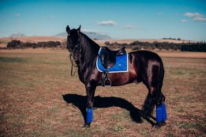 Equestrian Stockholm Sapphire Saddle Pad Fleece Bandages