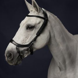 Presteq Faysport Anatomical Bridle