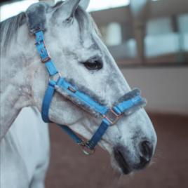 Equestrian Stockholm Parisian Blue Head Collar Set