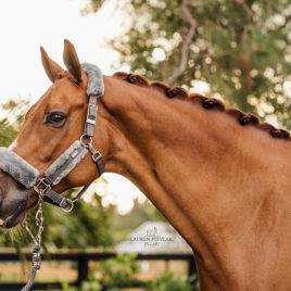 Equestrian Stockholm Silver Cloud Head Collar Set