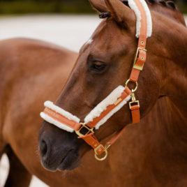 Equestrian Stockholm Bronze Gold Head Collar Set